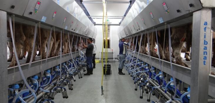 Platforme de muls vaci Afibanat