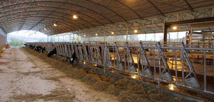fronturi de furajare pentru ferme de vaci