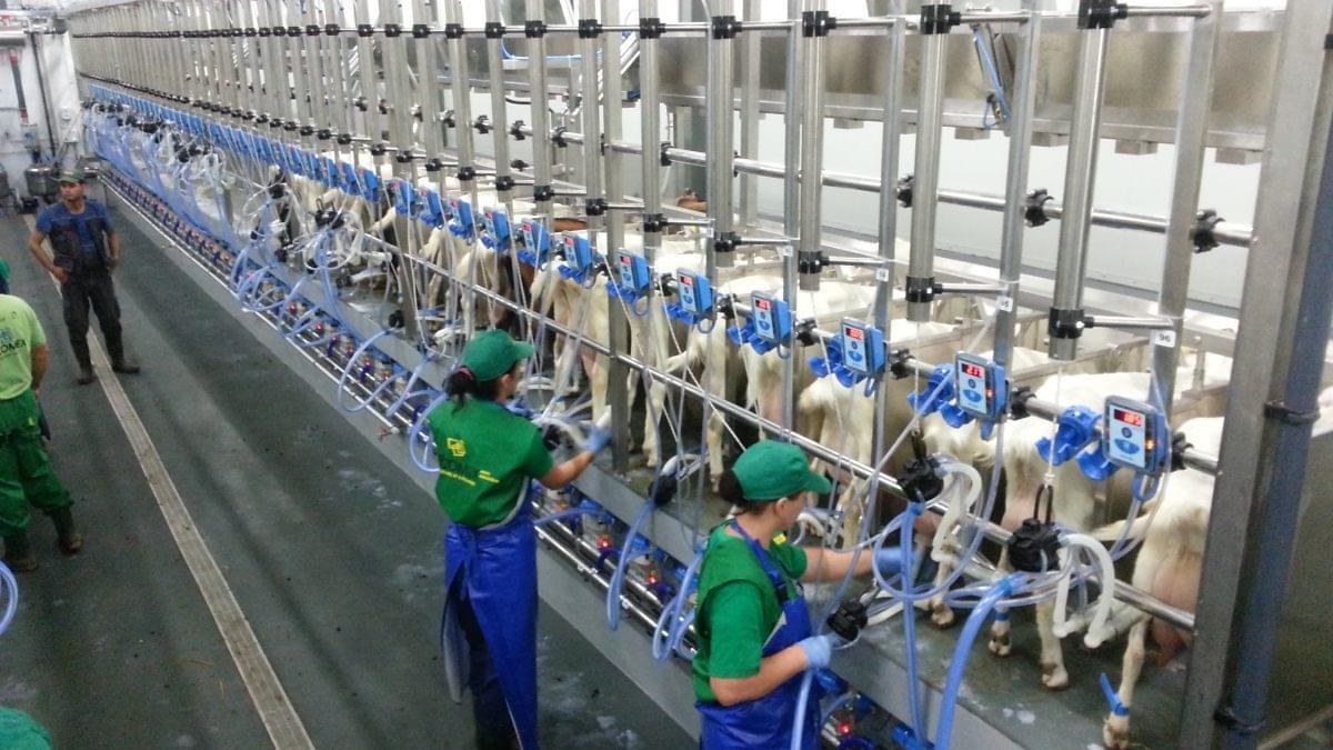 Instalatii de muls capre si oi pentru ferme