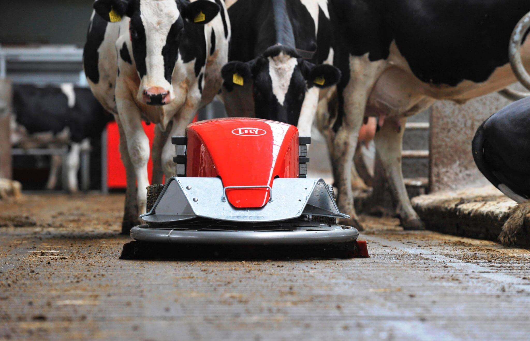 Lely Discovery este un robot de curatat dedicat fermelor